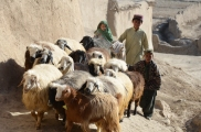 The kids brought their herd thru the village during the shura in Jamalkheyl