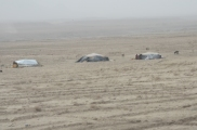 Kuchi tents