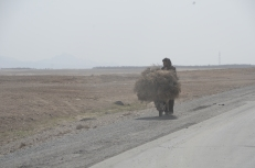 Wheelbarrows are loaded to over-capacity too