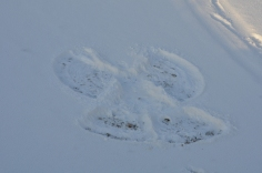I made a snow angel in the ground - you are never too old for snow angels