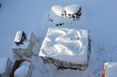 I made a snow angel on a pallet prepped for air movement.
