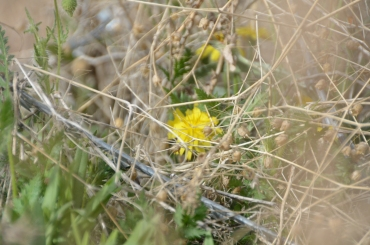 yellow is a popular color in the wild flowers of COP Mizan