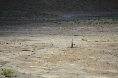 a stack of rocks in the wadi...marking what?