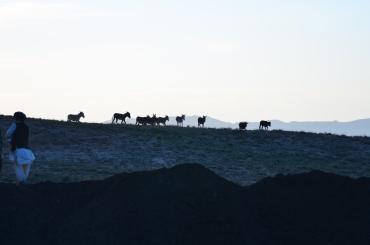 The donkeys gather on the ridge