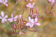 tiny little flowers everywhere