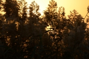 Sunrise on KAF