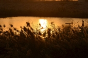 KAF sunrise through the marsh grass
