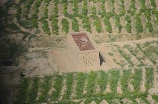 a grape hut near Qalat