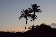 Hawaii thru 8 Feb 11 005