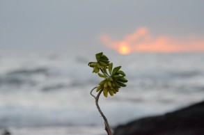 Hawaii thru 8 Feb 11 027