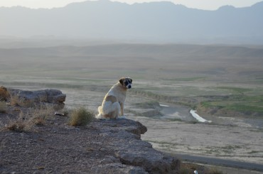 This pooch joined me on the bluff to enjoy the sunrise
